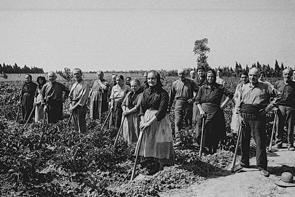 Les Col·lectivitats Agràries a Catalunya durant la Guerra Civil Espanyola (1936-1939)